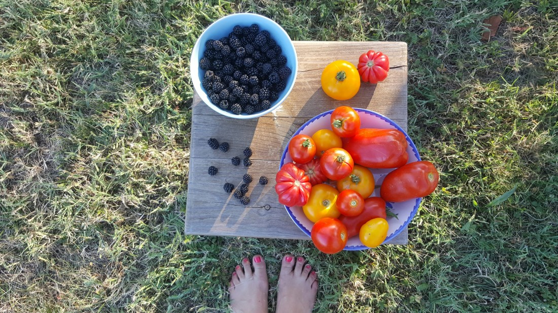 Potager tomate permaculture